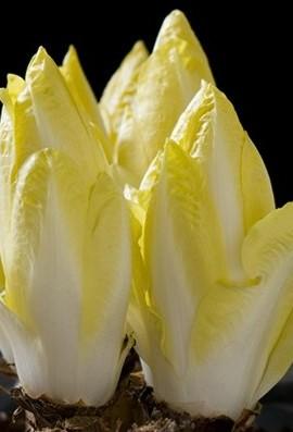 Chicory-Belgian-Endive-Totem-D2320END-Green-50-Hybrid-Organic-Seeds-by-Davids-Garden-Seeds-0