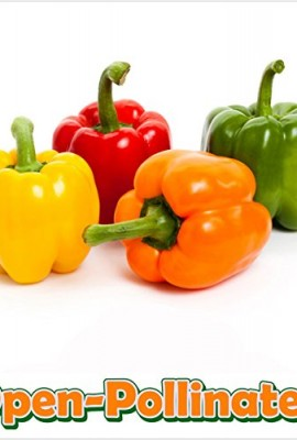 Fruit-Rhubarb-Victoria-D2577-Red-50-Heirloom-Seeds-by-Davids-Garden-Seeds-0-3
