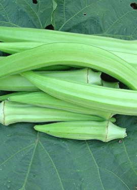 GIANT-COWHORN-OKRA-25-SEEDS-rare-1054-0-3