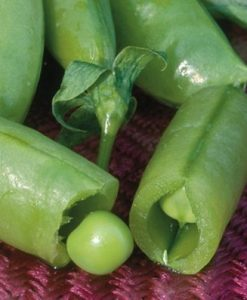 Pea-Super-Sugar-Snap-D2855-Green-100-Open-Pollinated-Seeds-by-Davids-Garden-Seeds-0