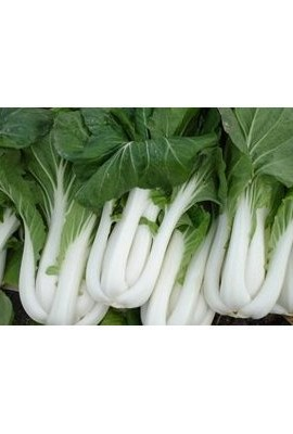 Seeds-and-Things-Bok-Choy-Pak-Choi-200-seeds-Easy-Grow-0-0