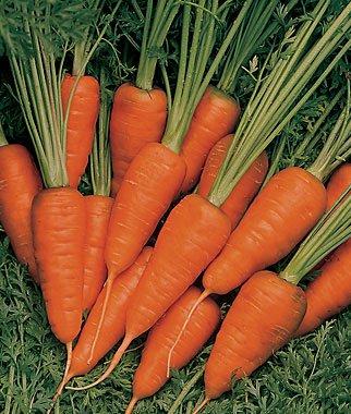 Short-N-Sweet-Carrot-200-Seeds-8130-Item-Upc650348691752-0