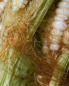 WORLDS-LARGEST-GIANT-CORN-CUZCO35-seedsRARE1050-0-1
