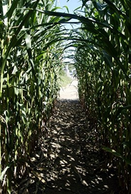 WORLDS-LARGEST-GIANT-CORN-CUZCO35-seedsRARE1050-0-3
