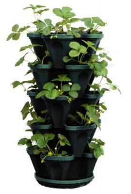 Container Garden Club Promoting Home Gardens