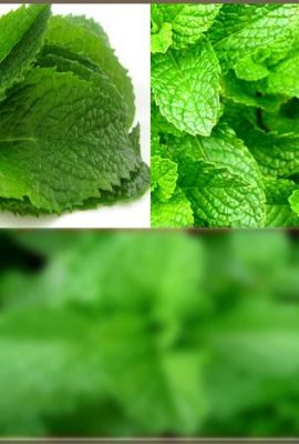 BULK-PEPPERMINT-MINT-Seed-MENTHA-MINT-SEEDS-Medicinal-and-Cosmetic-FRAGRANT-WARM-Makes-Great-Cup-of-Tea-0-0