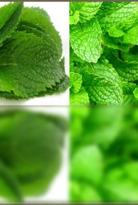 BULK-PEPPERMINT-MINT-Seed-MENTHA-MINT-SEEDS-Medicinal-and-Cosmetic-FRAGRANT-WARM-Makes-Great-Cup-of-Tea-0-1