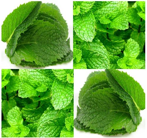 BULK-PEPPERMINT-MINT-Seed-MENTHA-MINT-SEEDS-Medicinal-and-Cosmetic-FRAGRANT-WARM-Makes-Great-Cup-of-Tea-0