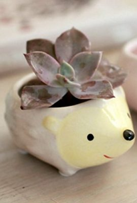 Cute-Hedgehog-Flower-Pot-Mini-Ceramic-Planter-YellowGreen-0-2