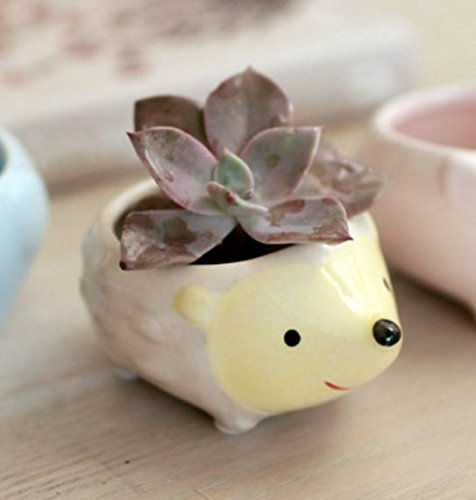 Cute Hedgehog Flower Pot Mini Ceramic Planter For