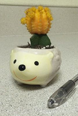 Cute-Hedgehog-Flower-Pot-Mini-Ceramic-Planter-YellowGreen-0-3