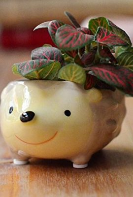 Cute-Hedgehog-Flower-Pot-Mini-Ceramic-Planter-YellowGreen-0-6