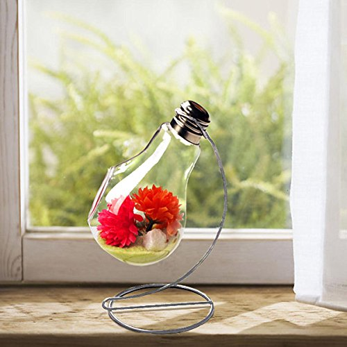 Charming Clear Glass Bulb Vase Air Plant Terrarium Succulent