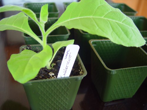 Set-of-36-Plastic-Nursery-Plant-Pots-Seed-Shaker-Card-and-5-Plant-Labels-Color-Green-Seedling-Containers-0-0