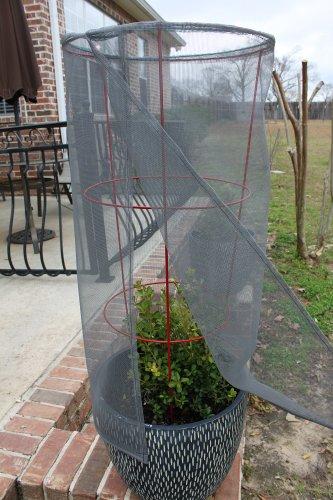 tomato screen plant protector
