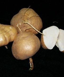10pcs-Yam-Bean-Seeds-Very-Sweet-Fruit-And-Vegetable-Plants-Chinese-vegetable-seed-Sweet-Potato-0-1