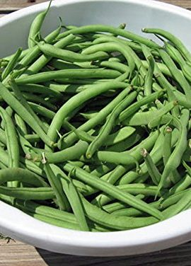 Bean-Pole-Kentucky-Wonder-Seeds-Organic-NON-GMO-20-seeds-per-packageHearty-Healthy-Green-Been-0-1