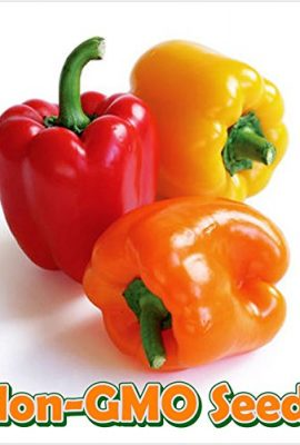 Eggplant-Black-Beauty-D2470-Black-50-Organic-Heirloom-Seeds-by-Davids-Garden-Seeds-0-4