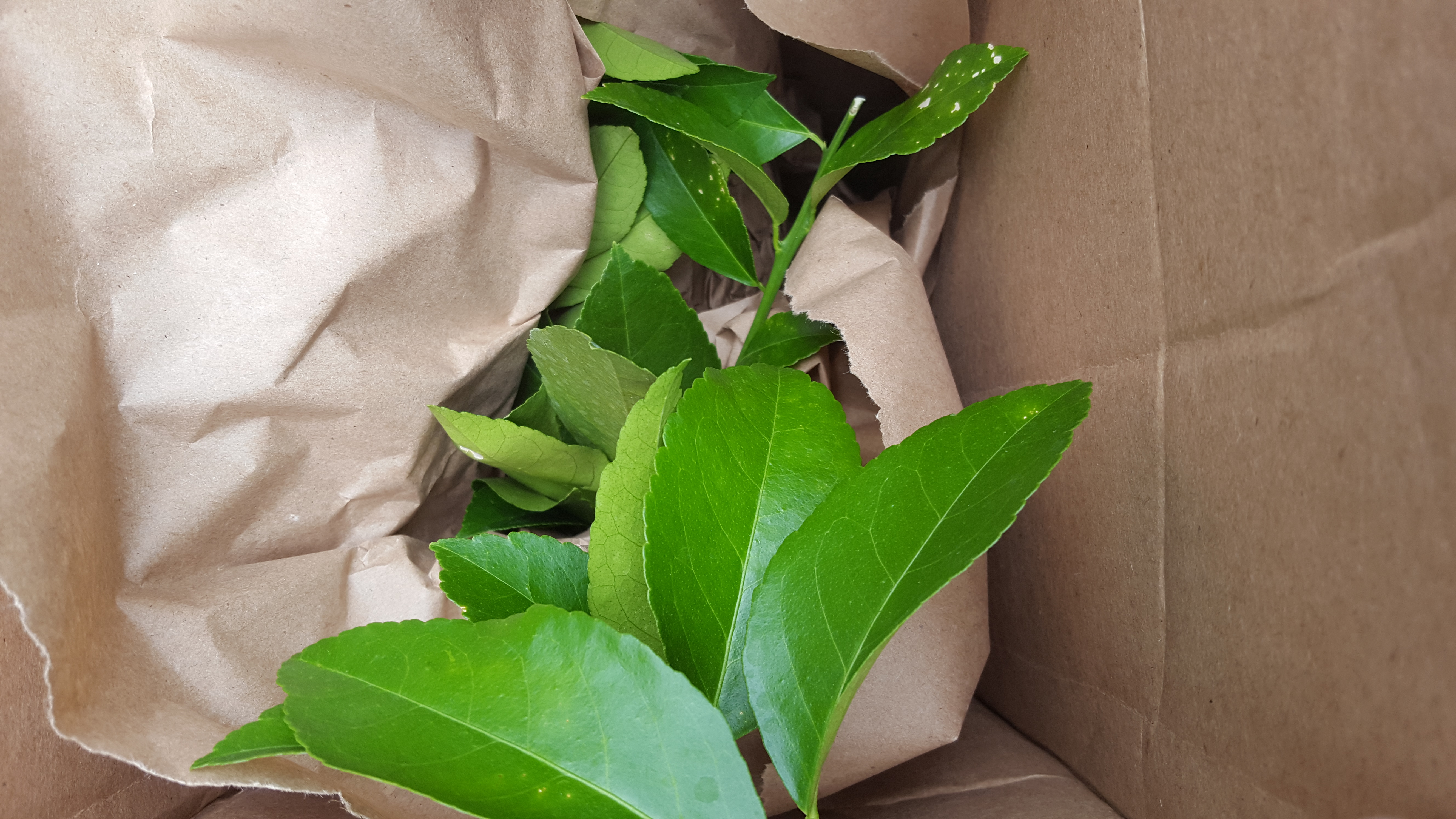 Inside the Lemon Tree Box