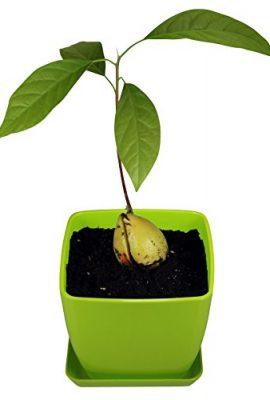 AvoSeedo-Set-with-Plant-Pot-0-0