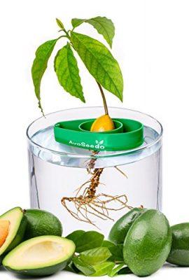 AvoSeedo-Set-with-Plant-Pot-0-2
