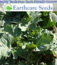 Collard-Greens-Georgia-Southern-1000-Seeds3-Grams-By-Earthcare-Seeds-0-3