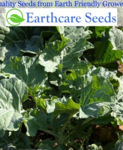 Collard-Greens-Georgia-Southern-1000-Seeds3-Grams-By-Earthcare-Seeds-0-3