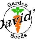 Davids-Garden-Seeds-Collards-Flash-D2116COLL-Green-200-Hybrid-Seeds-0-1