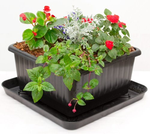 How to grow beets in containers container garden club - Water garden containers for sale ...