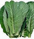 The-Dirty-Gardener-Heirloom-Organic-Southern-Georgia-Collard-Greens-50-Seeds-0-1