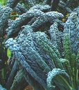 CERTIFIED-ORGANIC-SEEDS-Approx-550-Lacinato-Kale-Heirloom-Seeds-Kale-Collection-Non-GMO-Non-Hybrid-USA-0-0