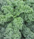 Davids-Garden-Seeds-Kale-Blue-Curled-Scotch-D311KAB-Green-500-Heirloom-Seeds-0
