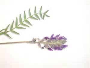 pressed-plants