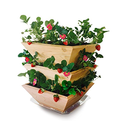 Strawberry In Container Growing: Grow Strawberries In Containers