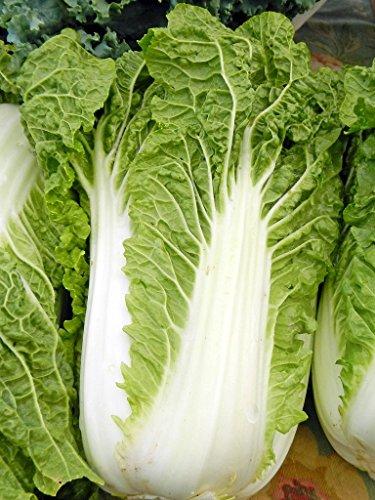 wholesalers Asian georgia vegetable