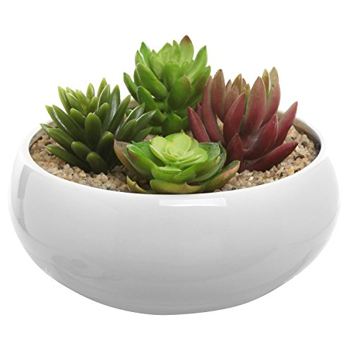6 5 Inch Round White Ceramic Succulent